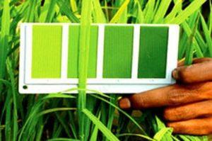 Leaf Colour Chart (L. C. C.) - Banabethi