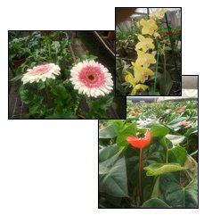 Cut-Flower-Project-Banabethi