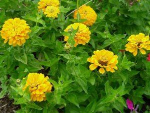Horticulture - Banabethi